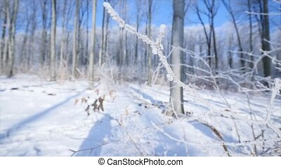 Frosted bare tree branch in winter background.