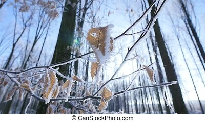 Frosted bare tree branch in winter background