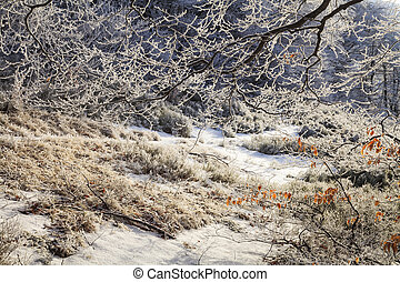 Frosted branches of trees in the beautiful winter forest