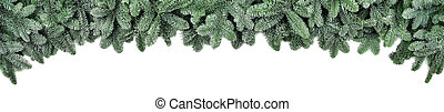 Frosted fir branches, wide Christmas border