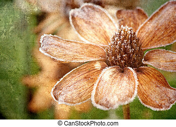 frosted, flower., textured
