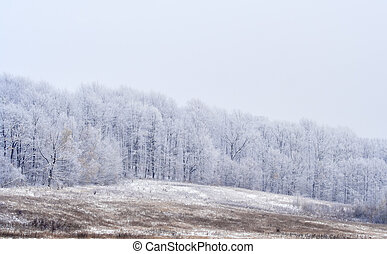 Frosted landscape with forrest and meadows in hazy day