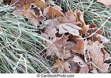 Frosted leaves and grass in the late autumn