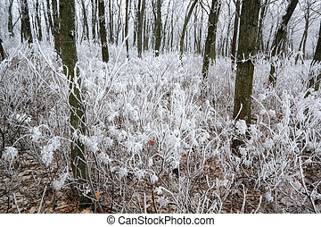 Frosted plant closeup II