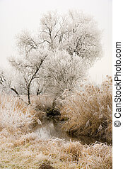 Frosted trees at the river Paar in a landcape conservation...