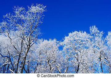 Frosty Air  - Ice-covered trees on the background of the sky