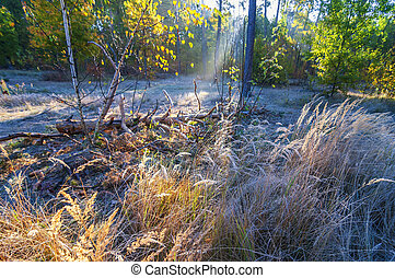 Frosty autumn morning in the forest.