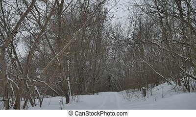 frosty dry nature tree branches winter landscape in snowy...