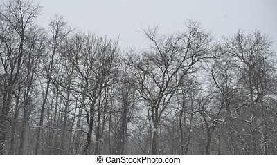 frosty dry tree branches winter nature outdoors landscape in...