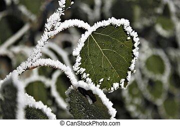 Frosty Foliage 2