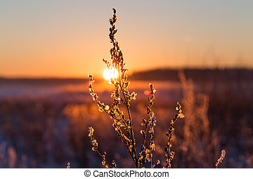 Frosty grass at winter sunset covered in snow