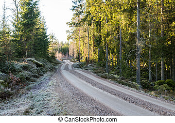 Frosty gravel road in a forest