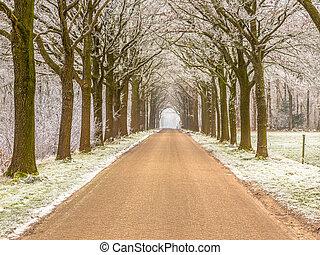 Frosty lane winter road in Friesland