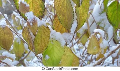 Frosty leaves covered with snow.