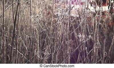 Frosty meadow during sunrise - Morning sun shining through...