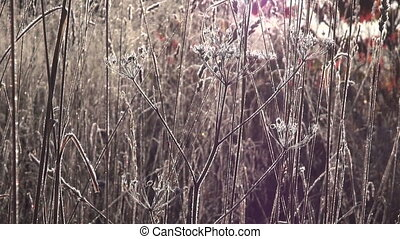 Frosty meadow during sunrise - Morning sun shining through...