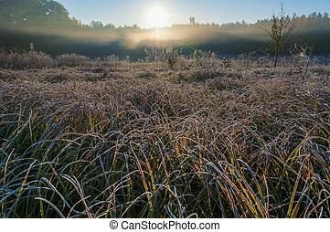 Frosty morning field
