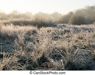 Early morning sunlight on frosty heathland during Golden Hour