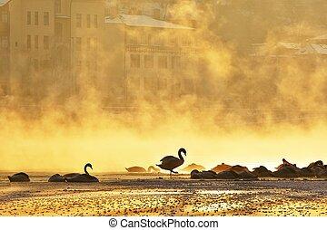 Frosty morning in Prague. Silhouette of swans on Vltava river in mystery fog.