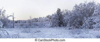 Frosty morning in the winter forest