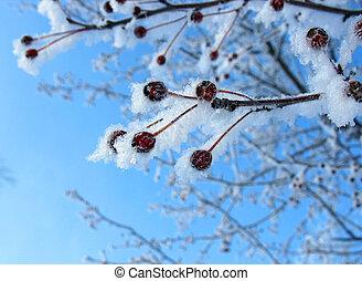 Frosty rennets