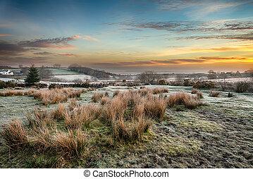Frosty Sunrise at Bellever on Dartmoor
