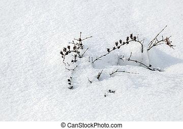 frosty tree branch