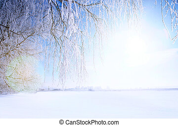 Frosty tree branch in winter against blue sky on the sunset Nature