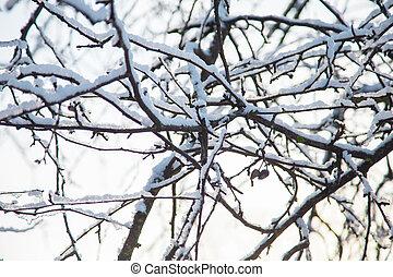 Frosty tree branch in winter.