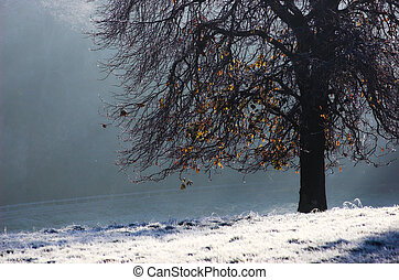 Frosty Tree - Tree on frosty autumn morning
