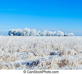 Frosty Trees and Field