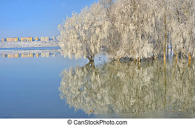 Frosty trees on Danube river