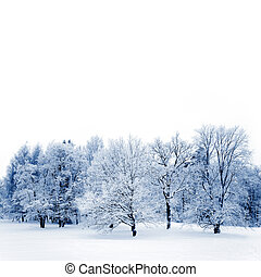 Frosty trees - Big oak and maple trees covered with white...