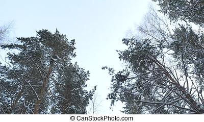 Frosty winter landscape in snowy forest. Winter road ,...