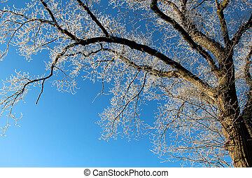 Frosty winter tree against blue sky