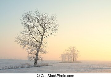Frosty winter tree at dawn