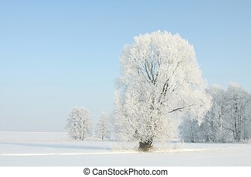Frosty winter tree in the sunshine