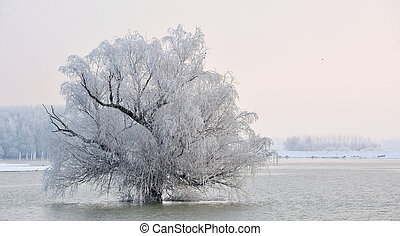 winter tree on Danube river