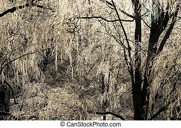 Frosty winter trees against blue sky