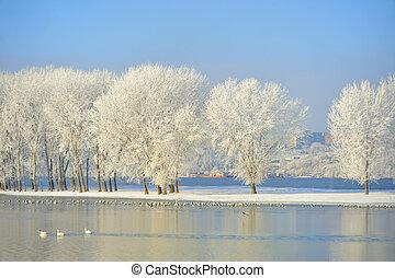 Frosty winter trees
