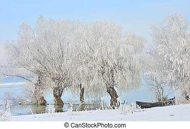 Frosty winter trees and boat