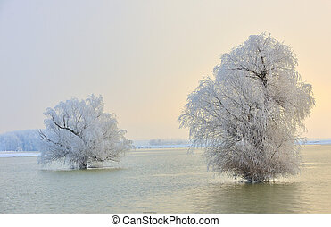 Frosty winter trees on Danube river