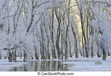 Frosty winter trees