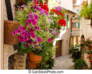 Frower pots on the wall in medieval street of old town in Spello, Italy