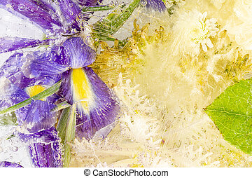 frozen abstraction from plants and flowers
