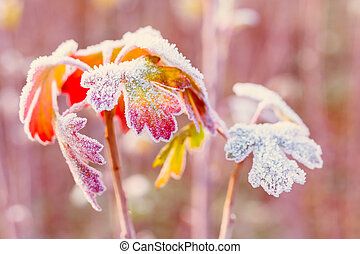 Frozen autumn leaves - shallow depth of field - abstract vibrant background