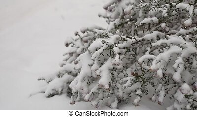 frozen beautiful field grass in winter snow nature landscape
