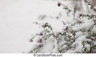 frozen beautiful field grass in winter snow the landscape...