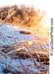 Frozen beautiful plants covered with icicles in sunlight. Winter background. Selective focus. Shallow depth of field