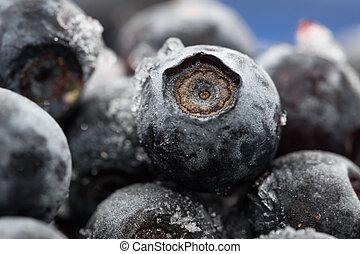 Blueberries. Macro. Closeup view. Shallow depth of view.